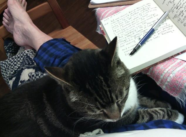 Cat&PenbIMG_20141123_212514